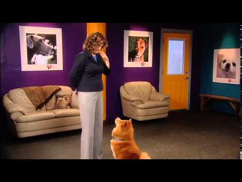 Train Your Dog Like A Pro DVD: Perfect Paws
