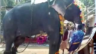 CHEMBOOTHRA DEVIDASAN /MAKARA CHOWWA /PANJAVADYAM/ Chottanikkara Subhash Narayanamarar