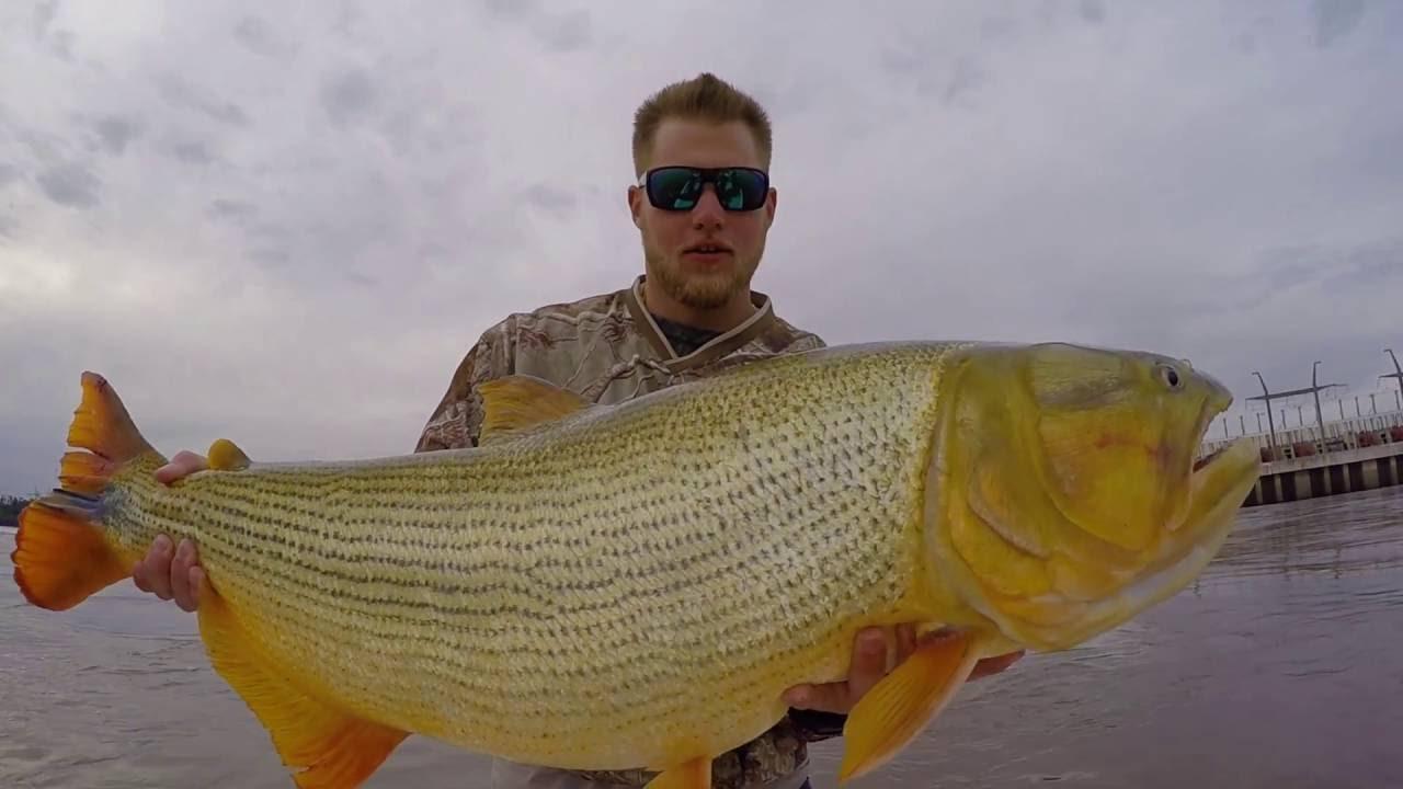 Golden dorado fishing in argentina youtube for Golden dorado fish