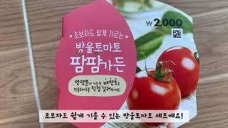 [다이소] 방울토마토 팜팜가든 키우기