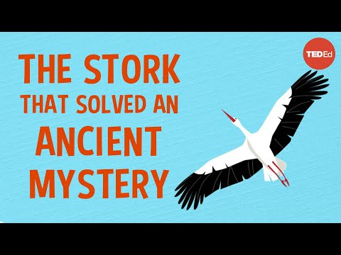 Video image: 3 bizarre (and delightful) ancient theories about bird migration - Lucy Cooke