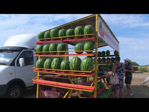 В Быковском районе началась реализация бахчевых культур