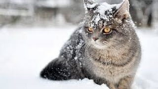The Wonderful World of Cats - HD Nature Wildlife Documentary thumbnail