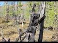 Идолы озера Дулук. Плато Путорана / Idols at Lake Duluk on the Putorana Plateau