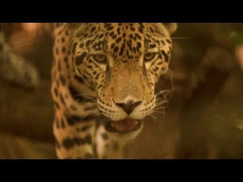 Belize: Nature & Wildlife