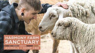 CBD and Pets - Harmony Farm Sanctuary in Bend, Oregon