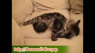 Как действует кошачья мята на кошек
