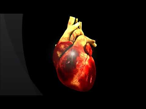 world heart day 2017 HZM Syria Launching