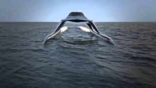 Glider Yacht  Final