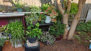 Remodelando Mi Nuevo Jardin 👩🌾+Nuevo Invernadero#jardineria #sosplantasalrescate