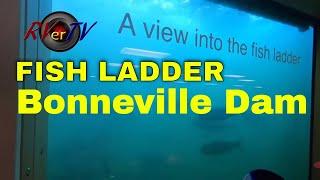 Bonneville Dam - Columbia River - Fish Ladder