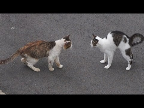ドキュメント『猫が友達になる瞬間』