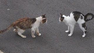ドキュメント『猫が友達になる瞬間』 thumbnail
