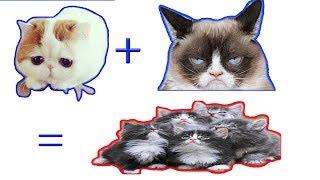 chó mèo hài hước càng ngày càng đông náo loạn thế giới | tik tok chó mèo hài hước - cats tv