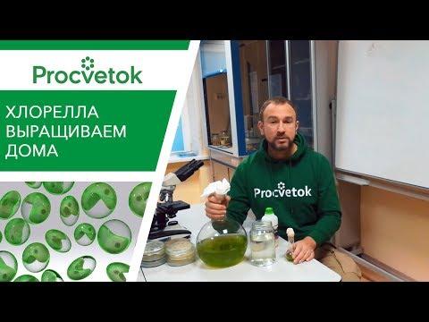 Вопрос: Какие растения запрещено самому выращивать в России?
