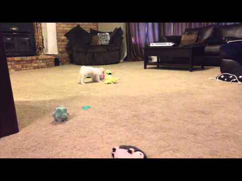 Puppy Gets 5 Toys At The Same Time
