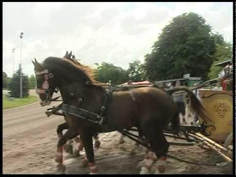 Ben Hur Chariot Racing