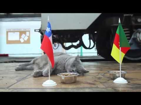 #КУБОК КОНФЕДЕРАЦИЙ 2017#ФИНАЛ(ПРОГНОЗ) ЧИЛИ VS ГЕРМАНИЯ - PES 2017(PS4 PRO)