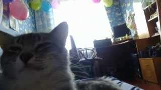 Доброе утро. Кот будит хозяйку. Котик