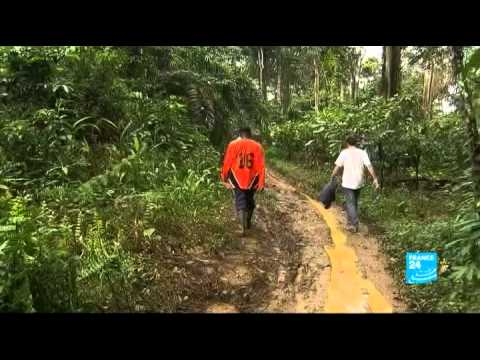 Cameroon: the rush for palm oil - Planet hope - FRANCE 24