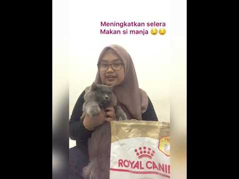 Royal Canin Cat Food | Review | APK