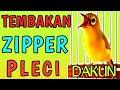 Pancingan Pleci Agar Cepat Nembak Zipper Buka Paruh  Mp3 - Mp4 Download