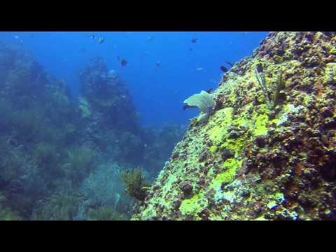 St. John (USVI) - Congo Cay Dive Site