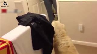 Funny Dogs Who Don't Want To Take A Bath  | Try Not To Laugh
