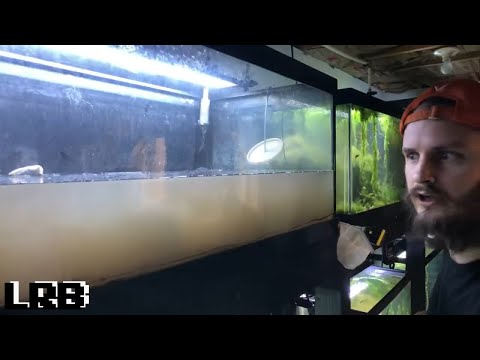 Aquarium Setup For Breeding Corydoras Cats And Guppies