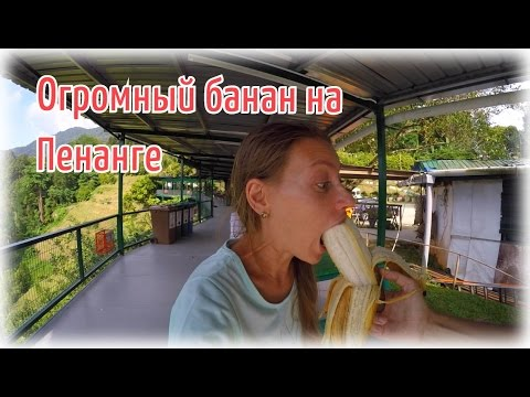 Пробуем самый БОЛЬШОЙ банан в мире | Аренда байка в Малайзии
