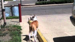 """Funny Attempt At Training My Dog To """"go Pee Pee"""""""