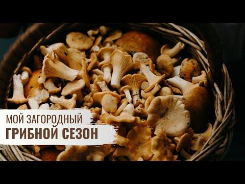Грибной сезон \\ Мой Загородный \\  Серия 5
