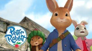 Peter Rabbit - The Biggest Radish in the Garden | Cartoons for Kids