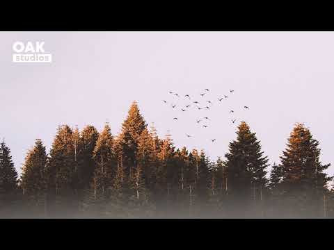 [no-copyright-music]-woods---acoustic-folk-|-background-music