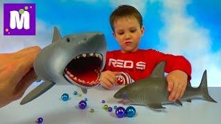 Акула растущая в воде и игрушечная акула Челюсти выращивание в воде Toy Shark Jaws growing in water