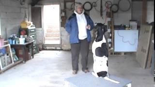 Maryland Dog Training English Pointer