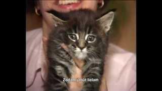 Мейн кун порода кошек