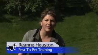 Harness 6 Foot Leash & Long Line: Dog Training Tips