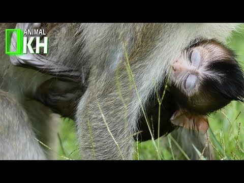 Pity Baby Monkey Crying Very Silently,Kidnapper give a baby back please