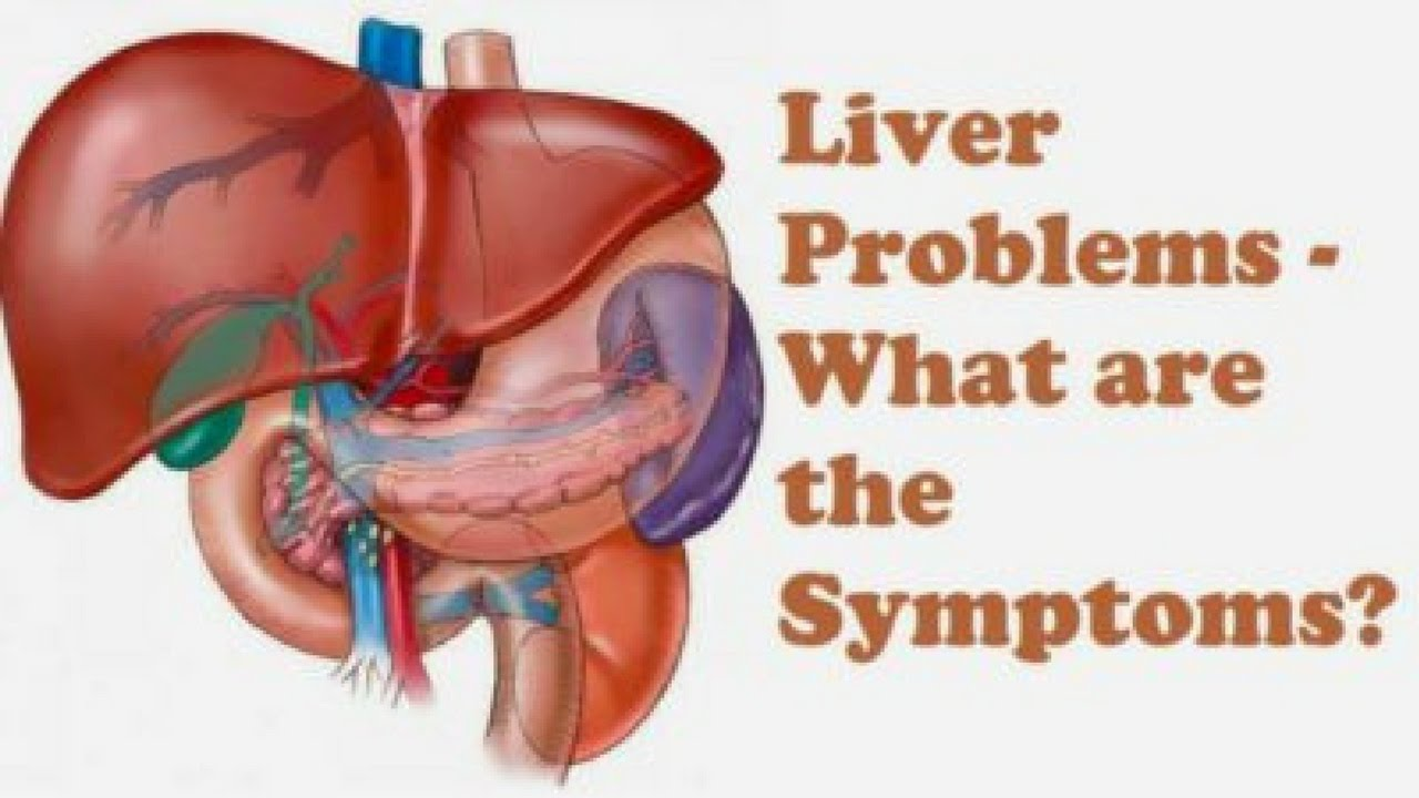 Where is the liver Find out 35