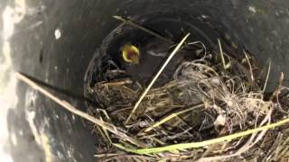 Dryer Vent Cleaning - Bird Nest - Rockville MD By Giross Hydro Green Clean