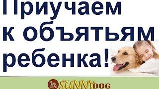 Собака для семьи - дрессировка. приучаем к объятиям. Дрессировка собаки для детей