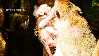 awesome!little baby monkey