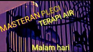 Gambar cover MASTERAN BURUNG  PLECI MALAM HARI