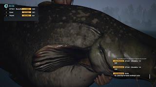 Dovetail Games Euro Fishing  RECORD!!! Monster Catfish 45kg