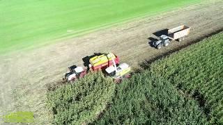 Maïsoogst 2018: Maïs hakselen door De Samenwerking BV en Stuurman Lauwerzijl