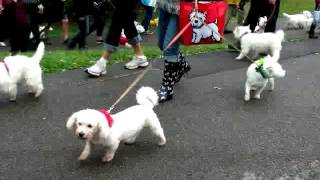 2015 Toronto Westie Rescue Walk And Fun Day Sept 13, 2015