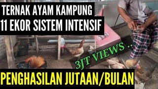 TERNAK AYAM KAMPUNG PENGHASILAN 4JT PER BULAN !!