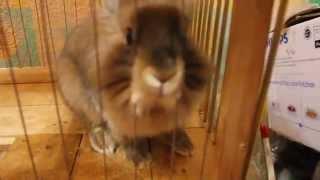 Как сделать клетку для кролика. Двухэтажный пентхаус зайки-побегайки