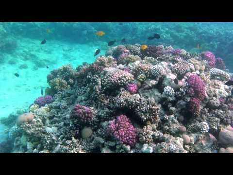 Schnorcheln im Roten Meer - Teil 2из YouTube · Длительность: 9 мин39 с